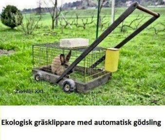 fr Kittad för Trädgård