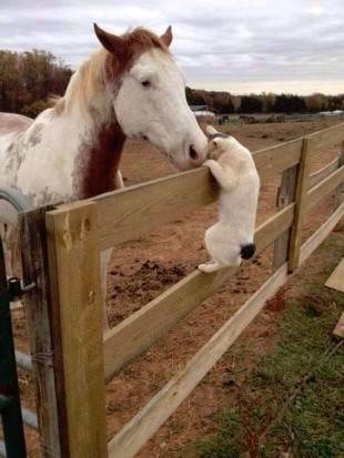 Katten o hästen