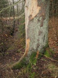 ... men en del kvar mot skogssidan
