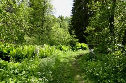 Först några bilder från Hyttdalen
