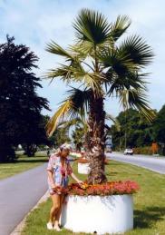 Semester Sydsverige 1988 Trelleborg palmerna