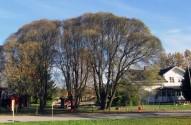 Stiliga tråd vid dagis på Herlenuiisvägen