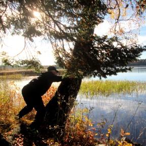 2015-10 Herrgårdsparken Otillåten trädfällning ;)