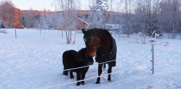 2019-01 Hästkärlek vid gamla Stjärnsfors stn