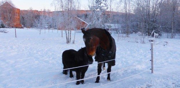 2019-01-20 Hästkärlek vid Stjärnsfors station