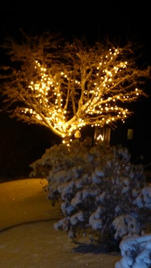 Björkbacken, Gunillas träd
